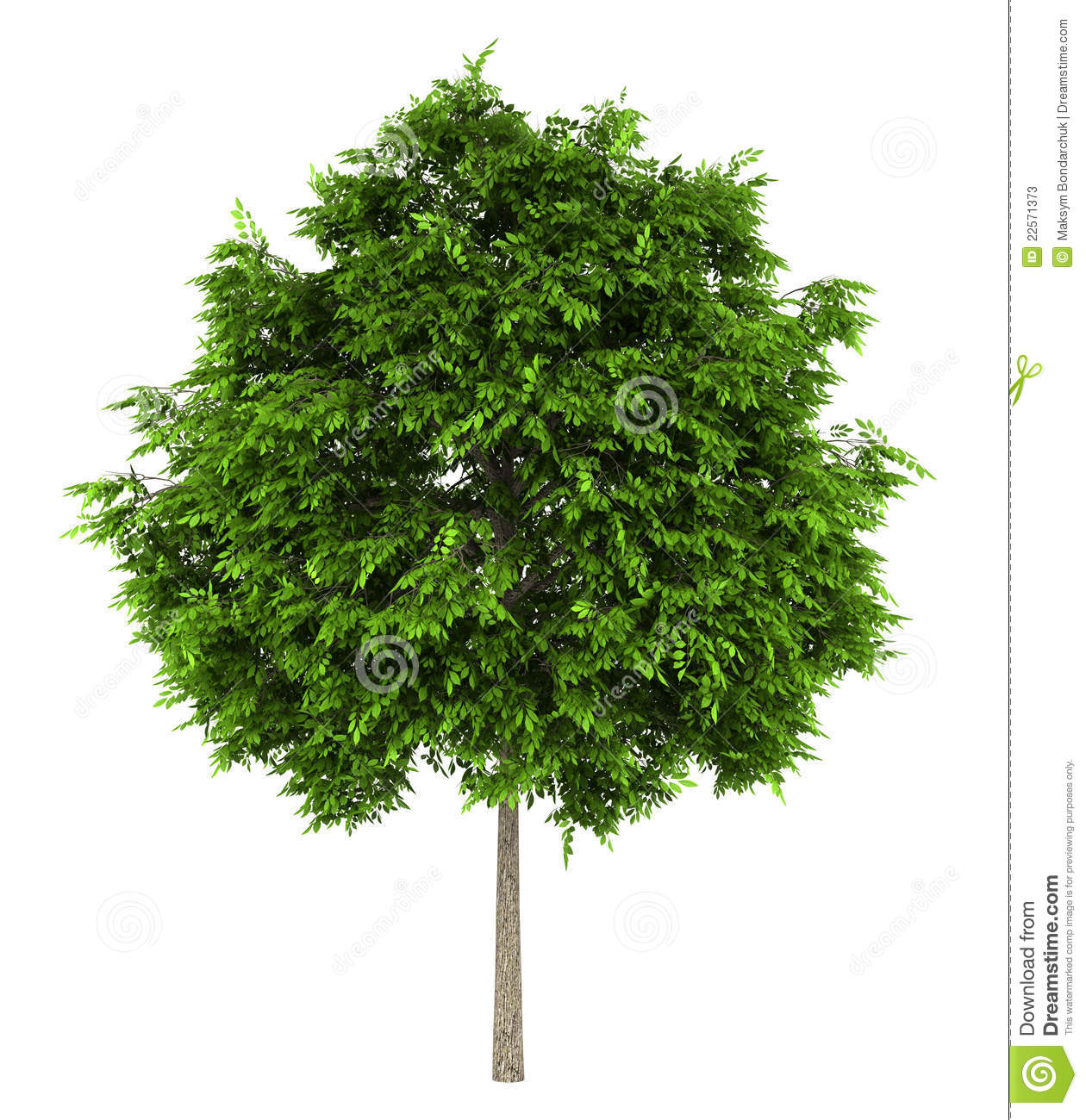 Ash Tree Clipart.