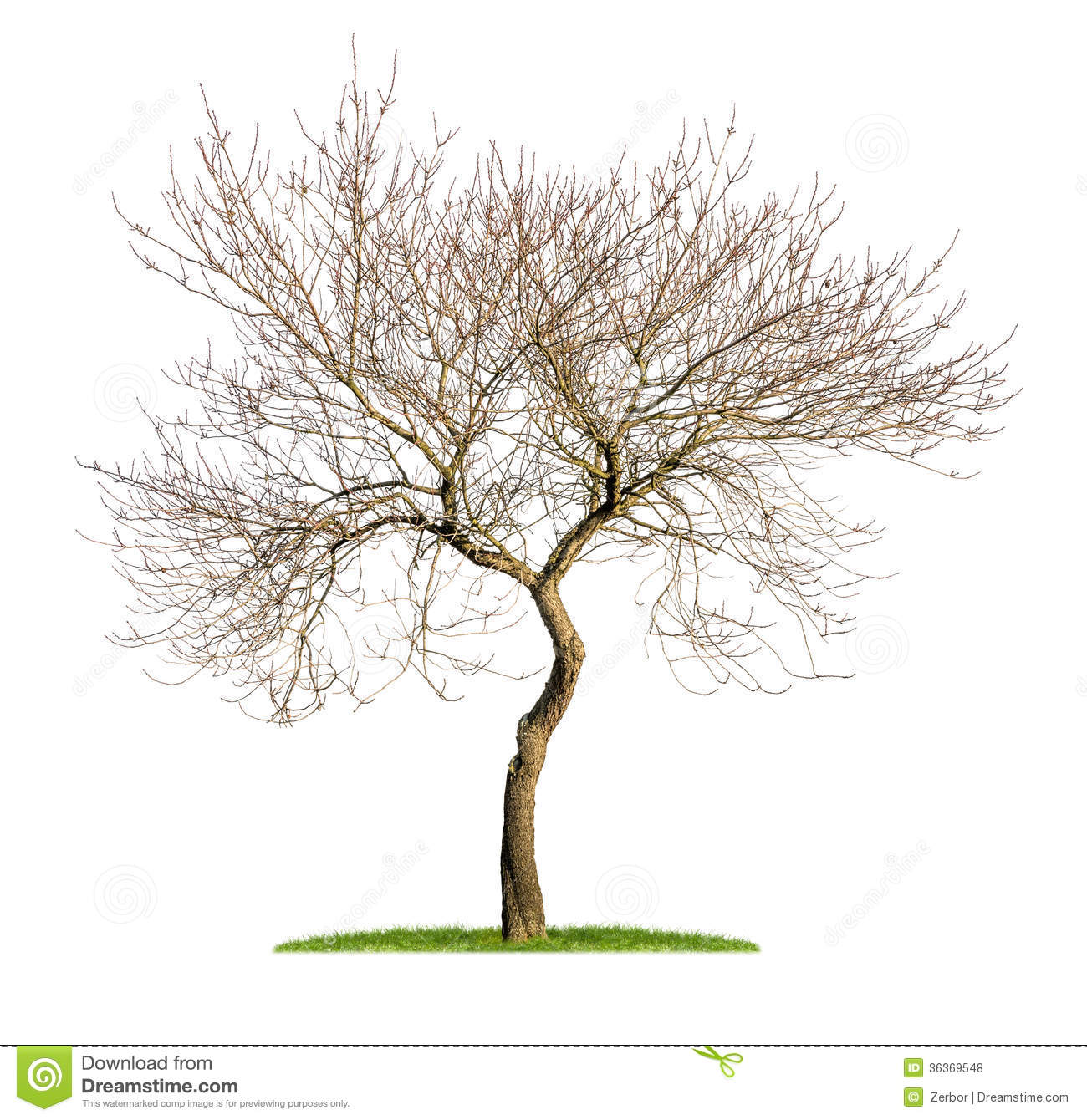 Almond Tree Clipart An Isolated Almond Tree In The #vMpAdS.