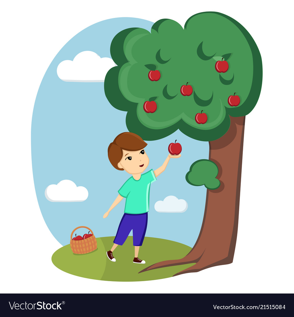 A boy collects apples from a tree nature village.