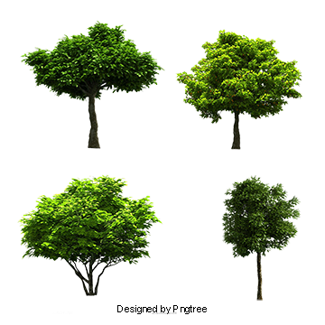 Tree PSD, 30,472 Photoshop Graphic Resources for Free Download.