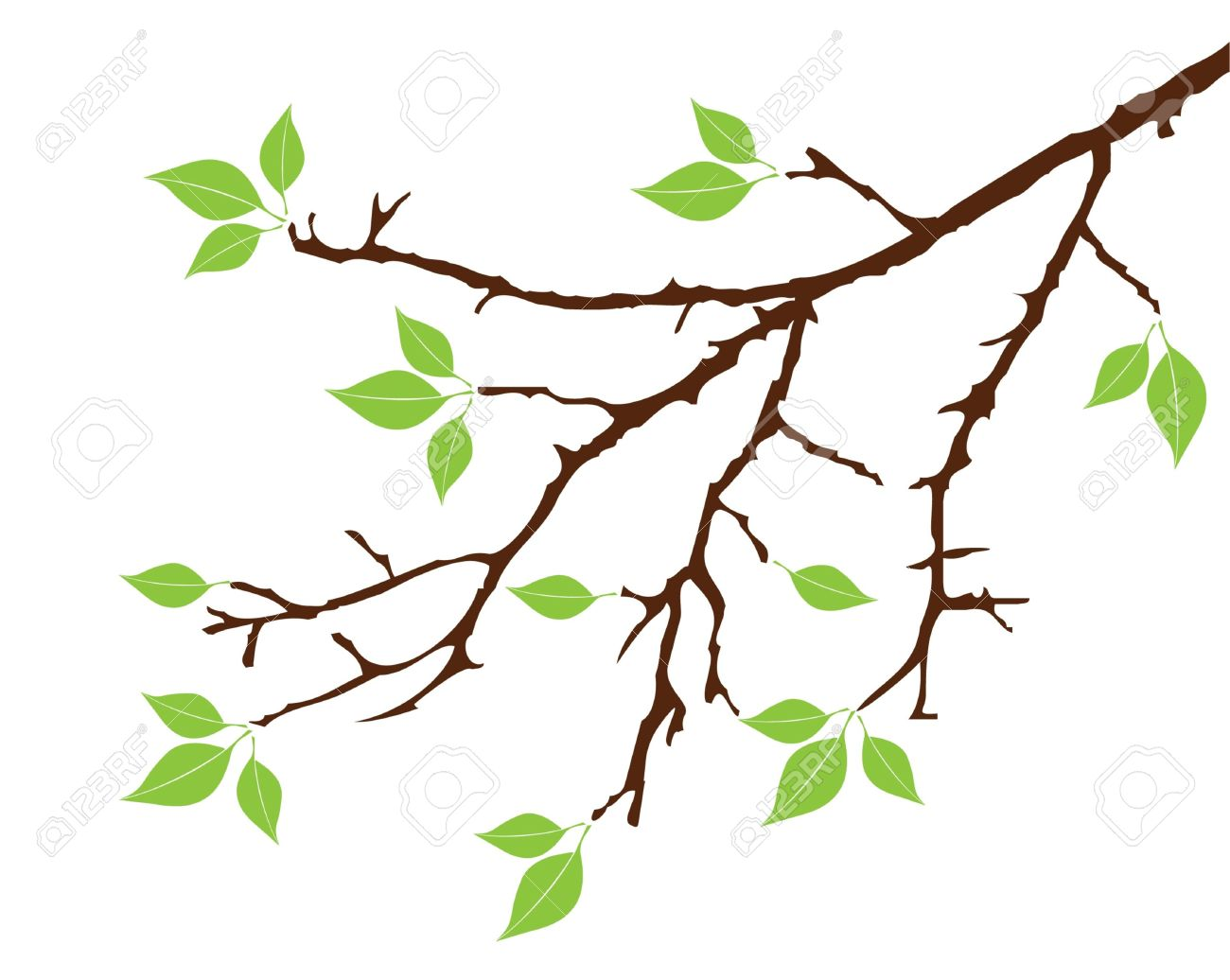 Vector Tree Branch With Leaves Royalty Free Cliparts, Vectors, And.