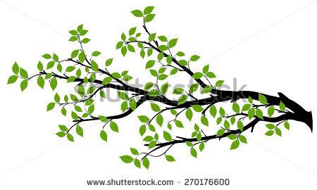 Branches Stock Photos, Royalty.