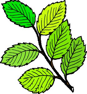 Twig Clip Art Download.
