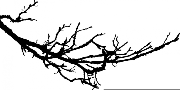 Tree Limb Clipart Images.