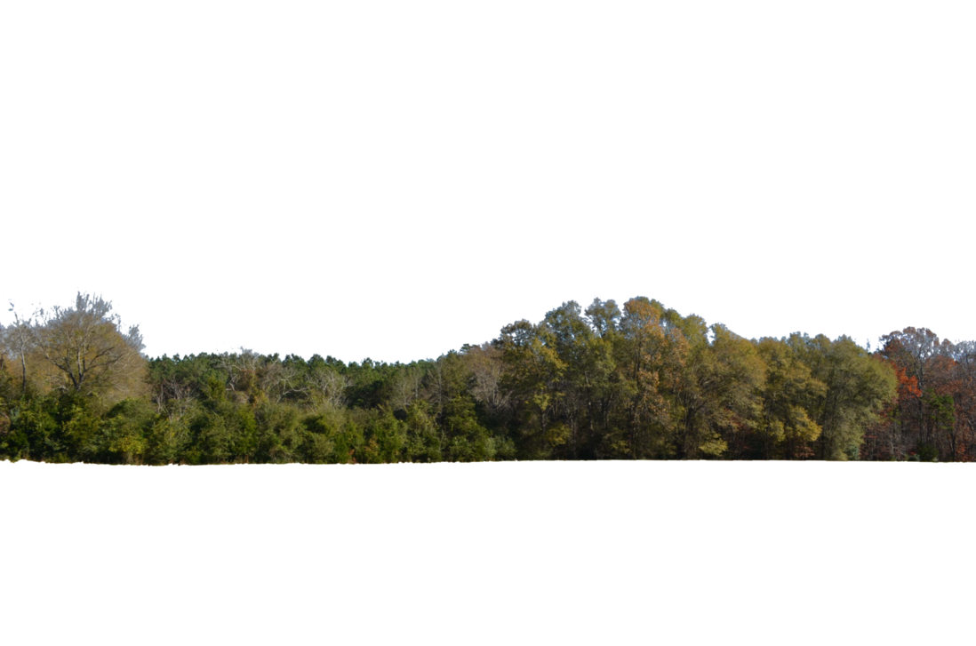 Tree line png 1 » PNG Image.