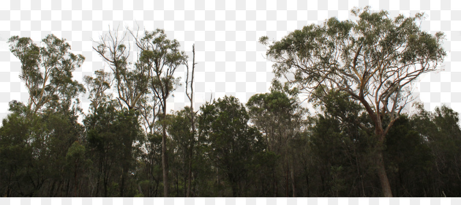 Tree Line Png & Free Tree Line.png Transparent Images #29972.