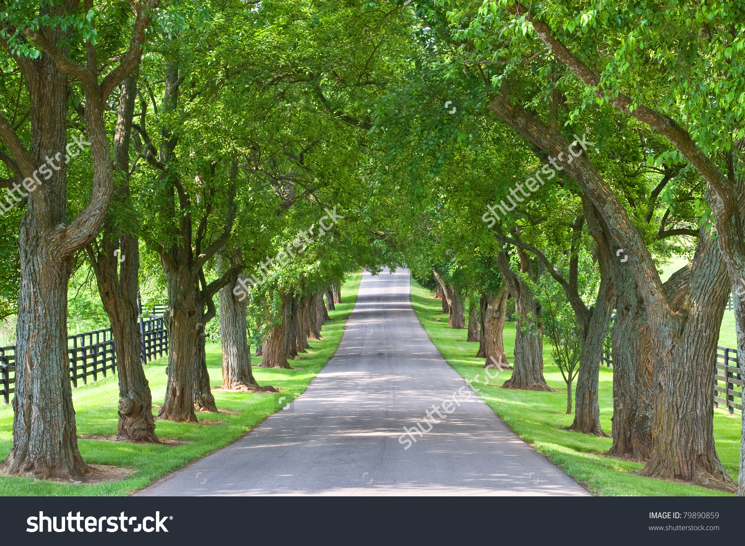 Tree Lined Road Stock Photo 79890859.
