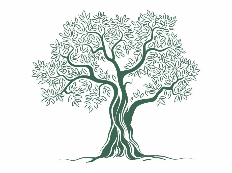 Olive Tree Logo Png , Png Download.