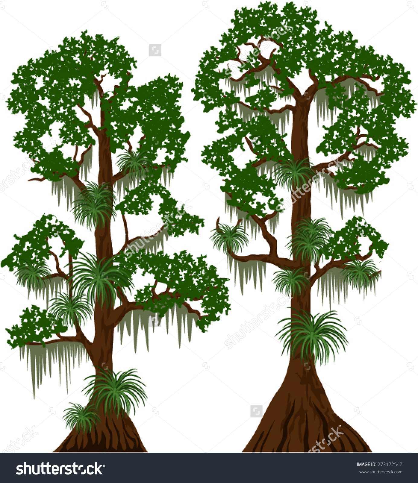 Tree moss clipart.
