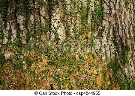Stock Images of tree bark with moss.
