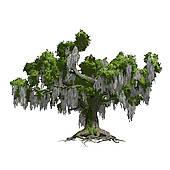 Tree moss clipart.