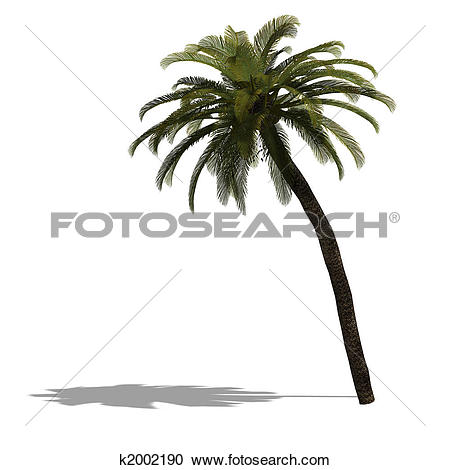 Stock Illustrations of 3D Render of a palm tree k2002190.