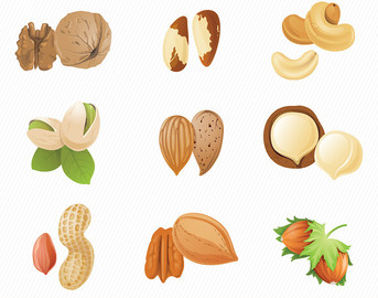 Tree nut clipart.