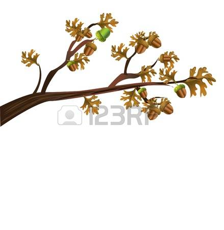 8,273 Tree Nuts Cliparts, Stock Vector And Royalty Free Tree Nuts.