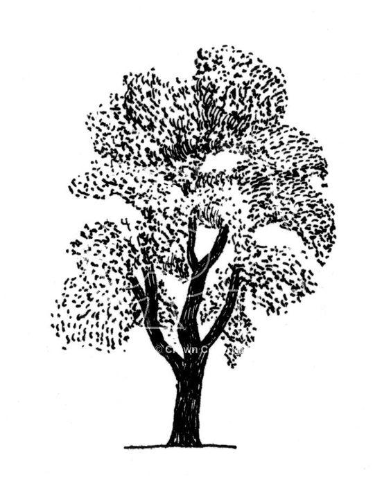 Tree of heaven clipart.