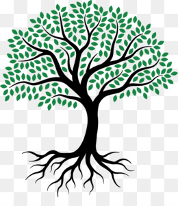 Tree Of Life PNG.