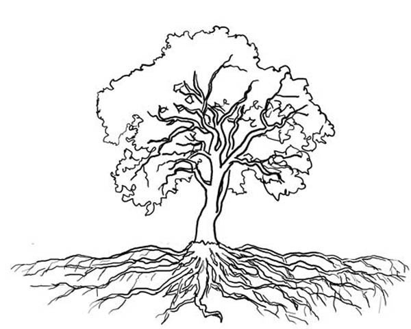 Roots Clipart Tree Outline.