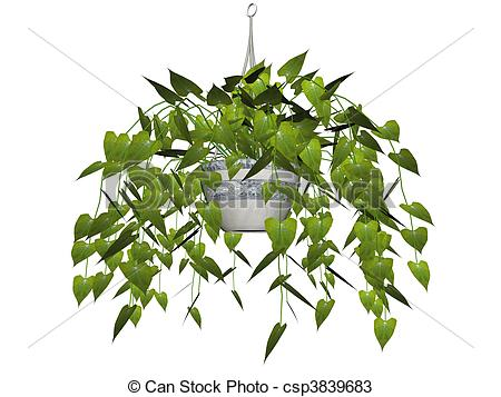 Philodendron Stock Illustrations. 87 Philodendron clip art images.