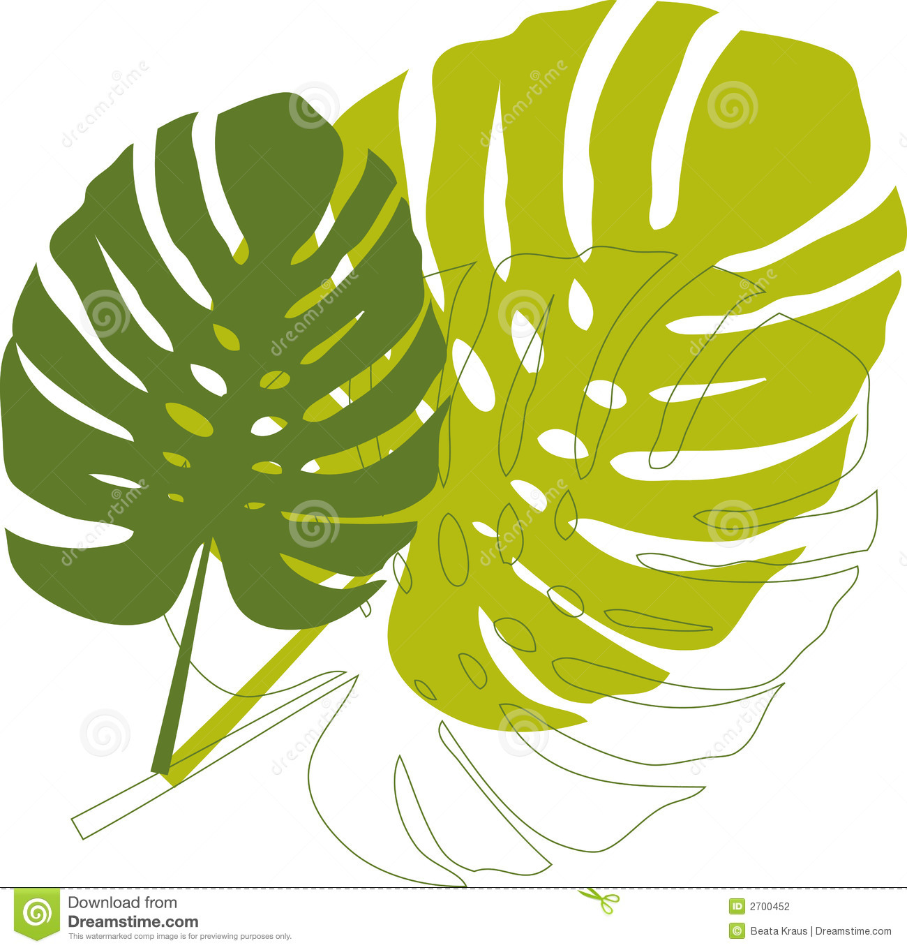 Philodendron Stock Illustrations.