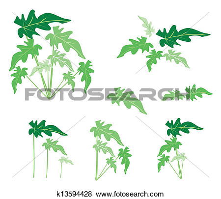 Clip Art of A Set of Philodendron Leaves on White Background.