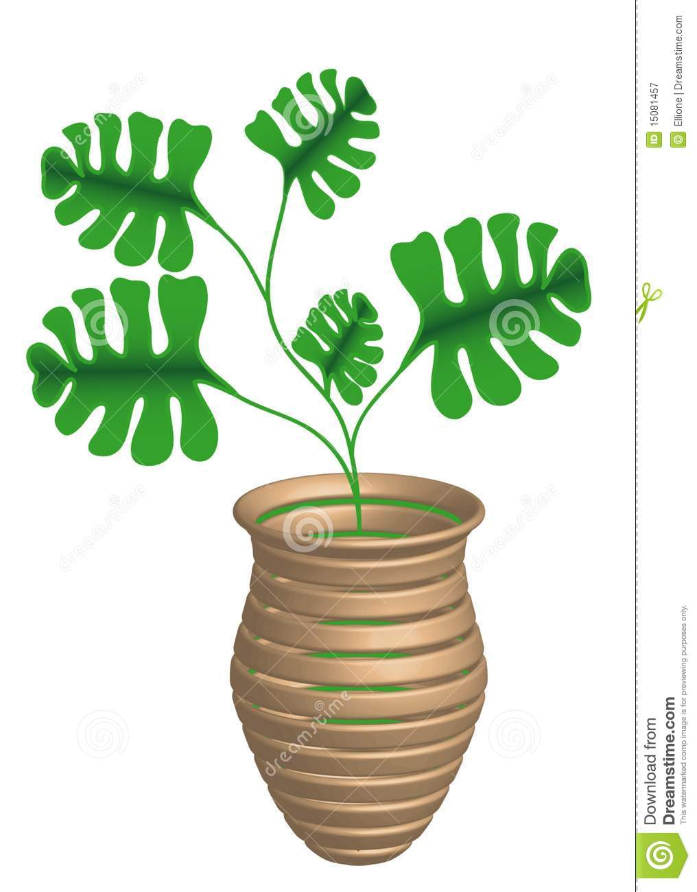 Philodendron Royalty Free Stock Photography.