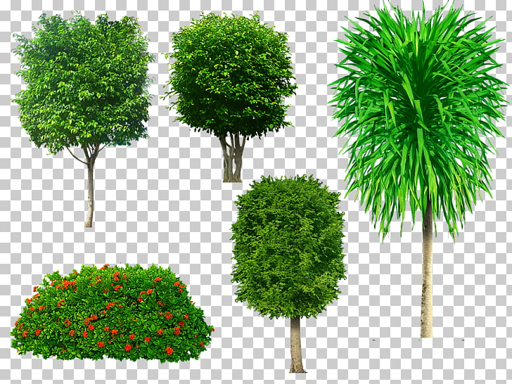 Tree Portable Network Graphics Adobe Photoshop Psd, tree PNG.