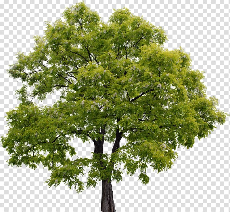 Green trees, Adobe shop Elements Adobe Systems Rendering.