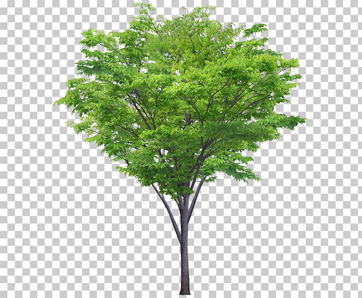 Portable Network Graphics Tree Adobe Photoshop Shrub, tree.