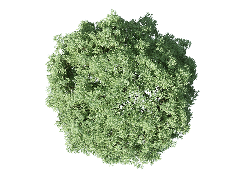 Tree Plan PNG, Top View Trees Clipart Transparent, Free.