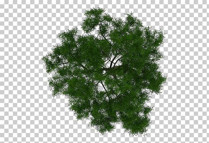 Tree Architecture Plant Project, tree plan, green leafed.
