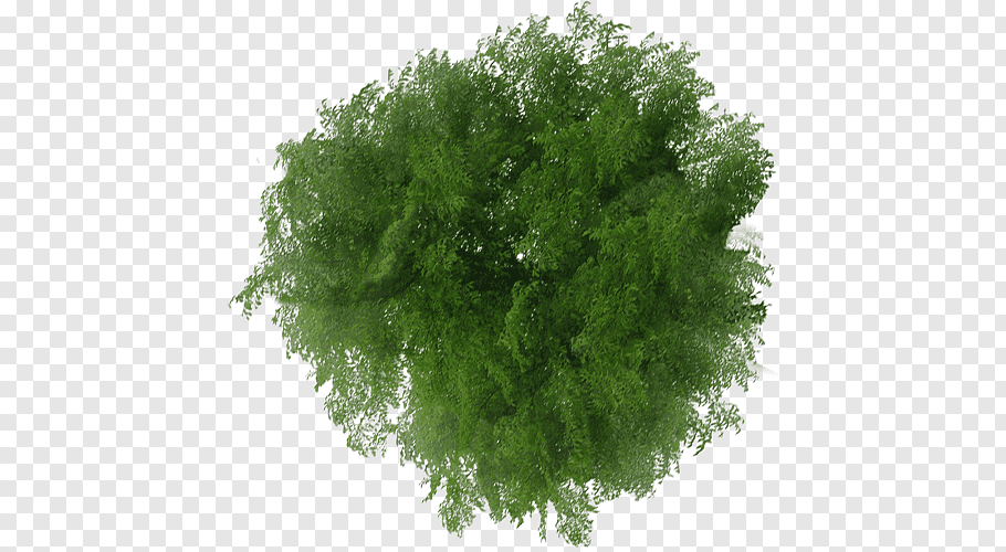 Tree Plan File viewer, tree top view, green leaves free png.