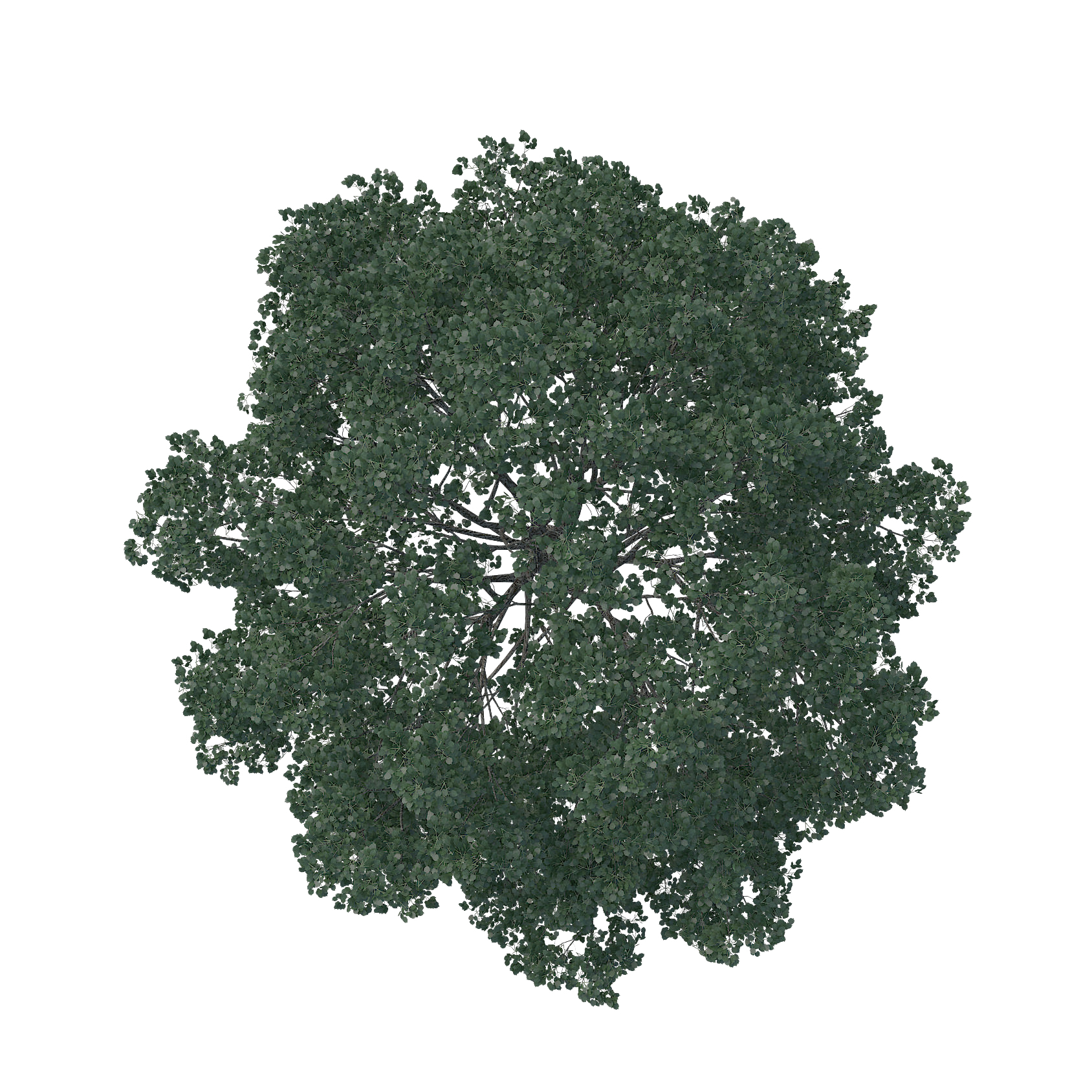 English oak Tree Architecture Pine Landscape.