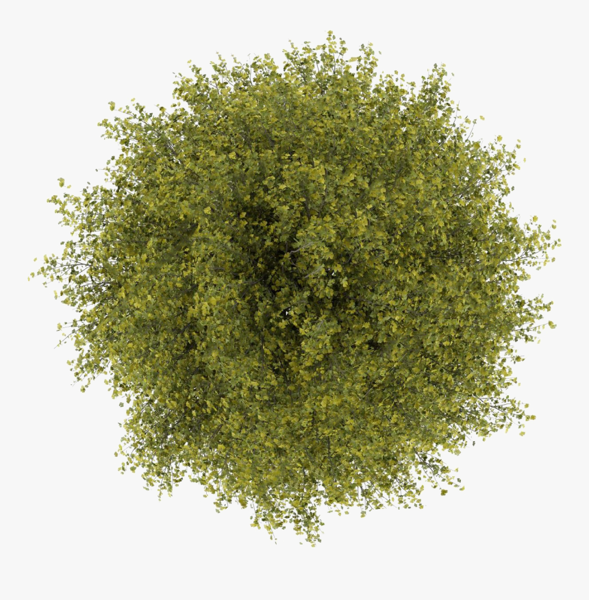 Tree Top View Png For Photoshop, Transparent Png.