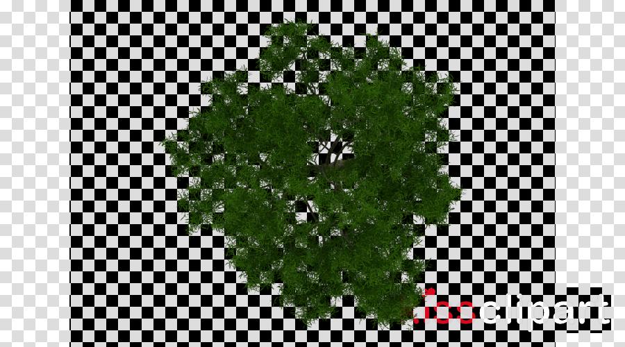 Plan Tree clipart.