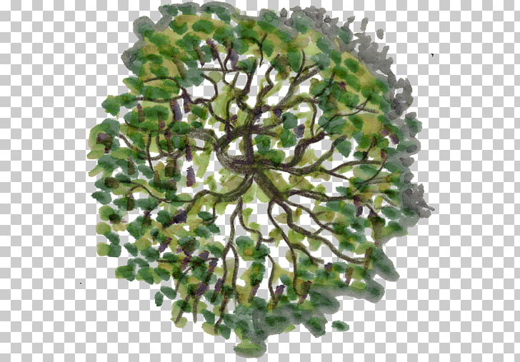 Tree Plan Photography, tree top view, green tree painting.