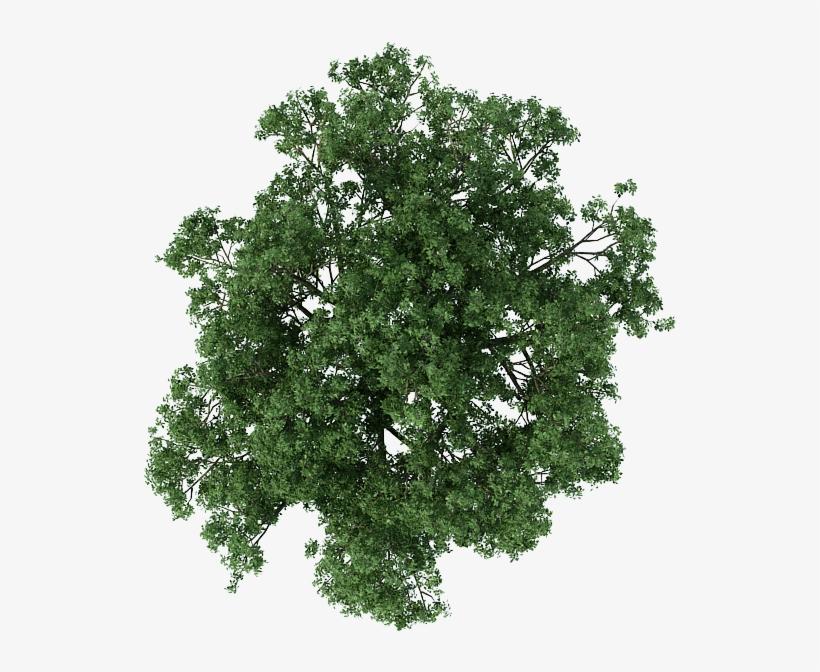 Trees Photoshop.