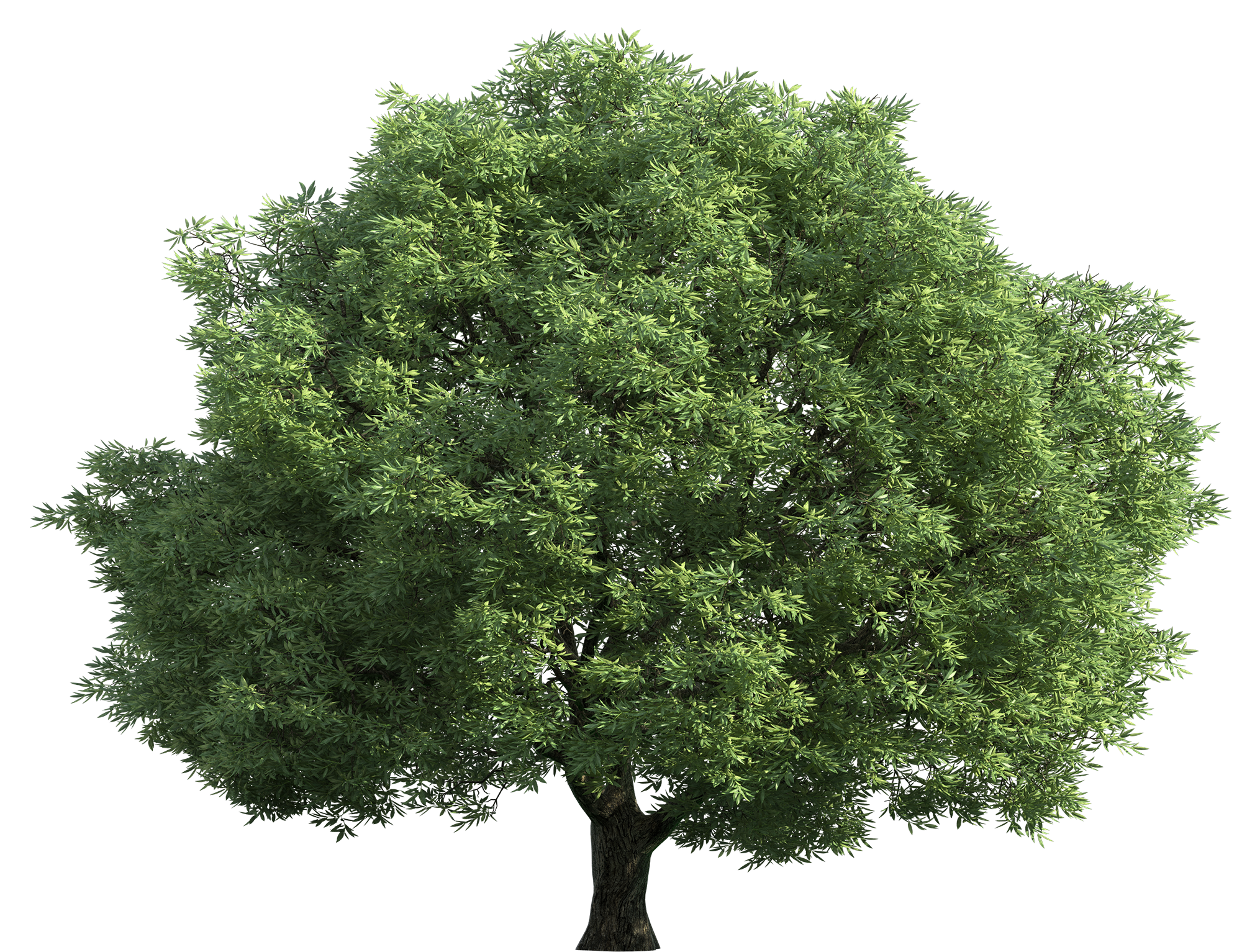 Realistic Green Tree PNG Clip Art.