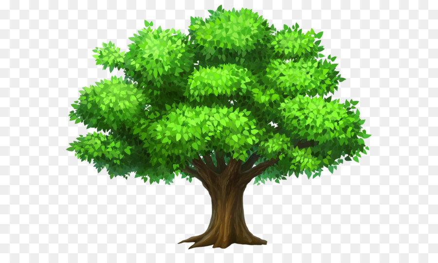 Oak Tree Leaf png download.