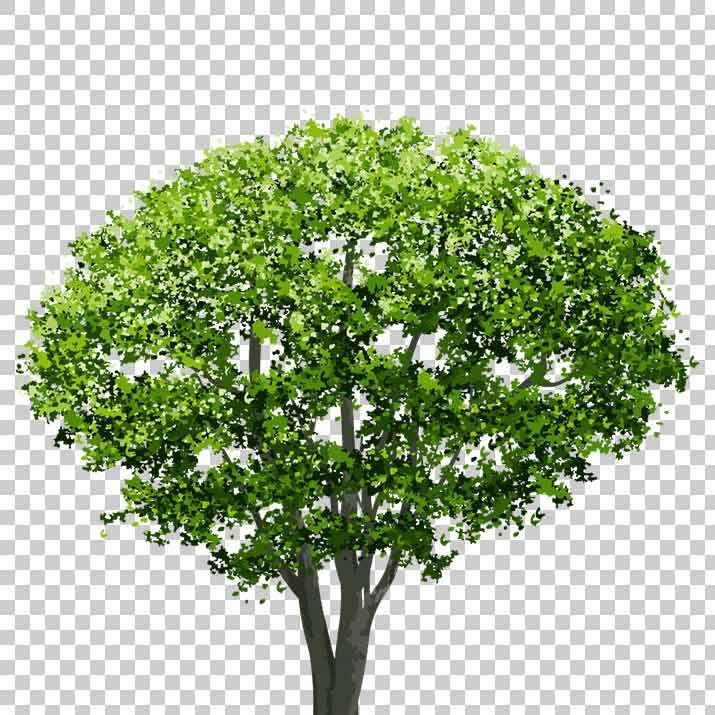 Tree PNG Images, Pictures, Download Free PNG Images.