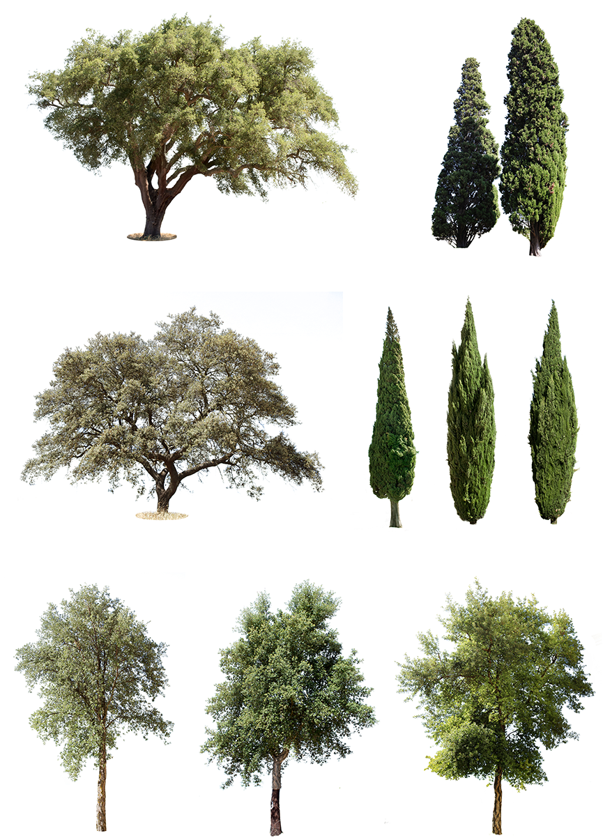9 mediterranean trees pack 1.