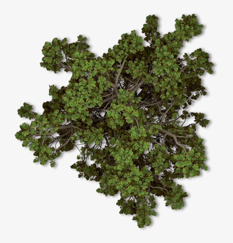 Free Tree Plan Png.