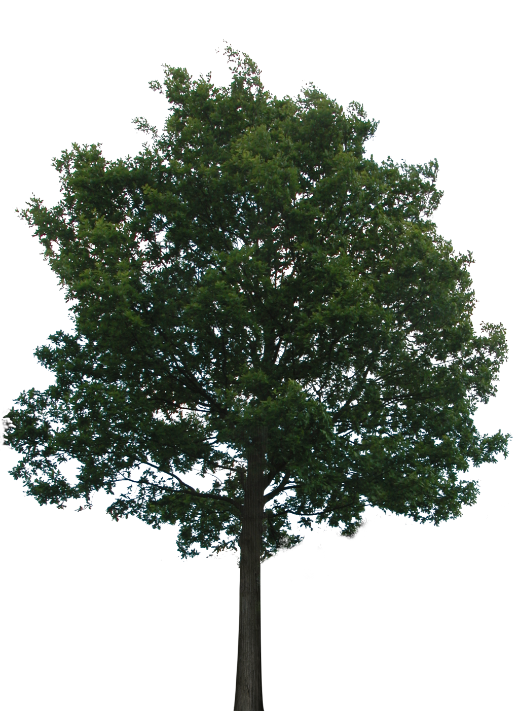 Hd Tree Png Transparent Background #718.