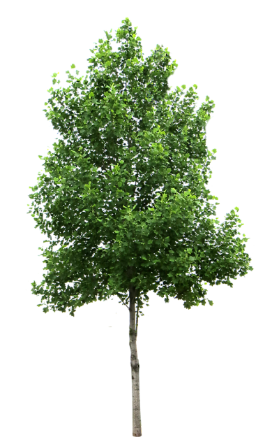 Download TREE Free PNG transparent image and clipart.