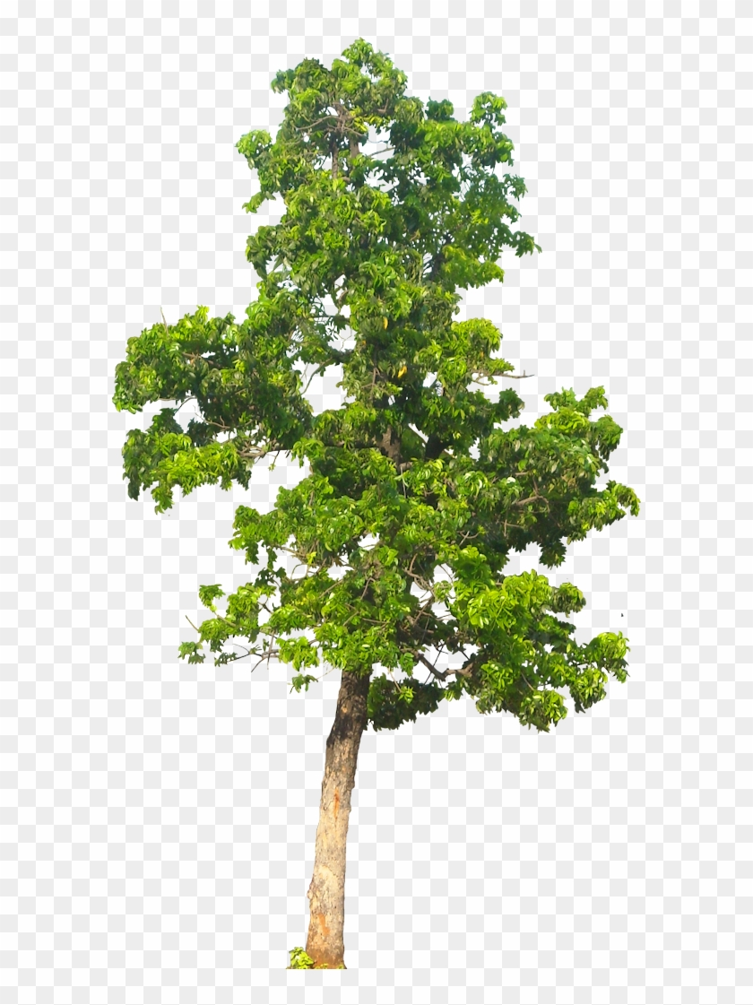 Tree Background Png Image.