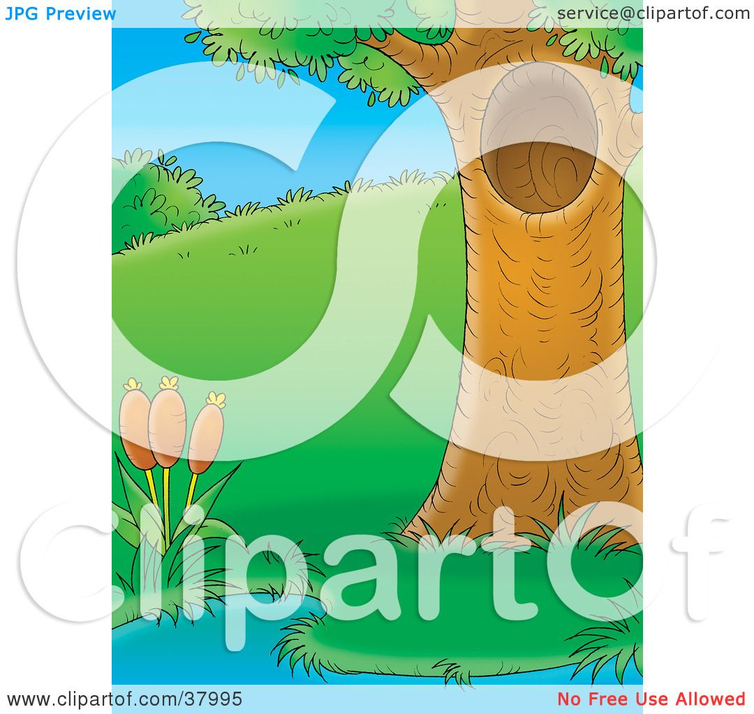 Clipart Illustration of a Mature Tree With A Hole, Beside A Pond.