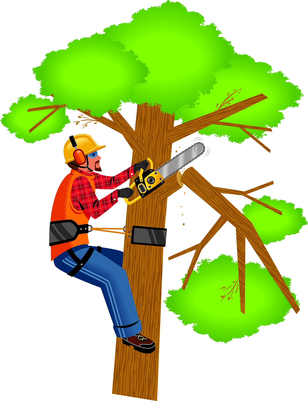 RILEY SHIPPY TREE SERVICE.