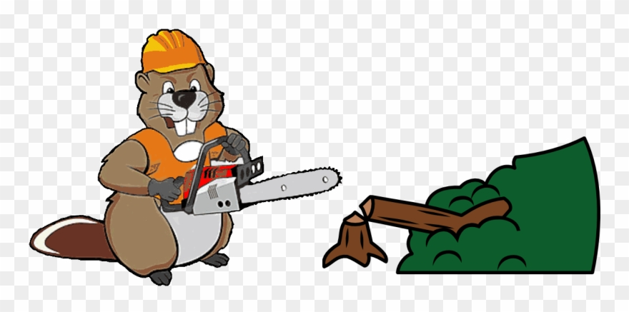 Full Tree Removal, Trimming, Pruning, And Stump Grinding.