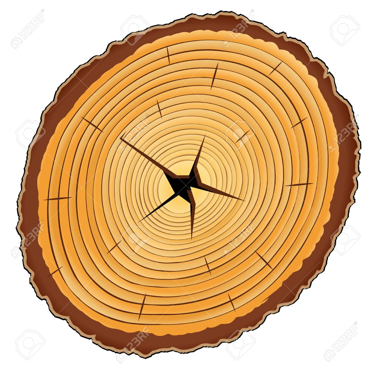 Tree ring clipart #4