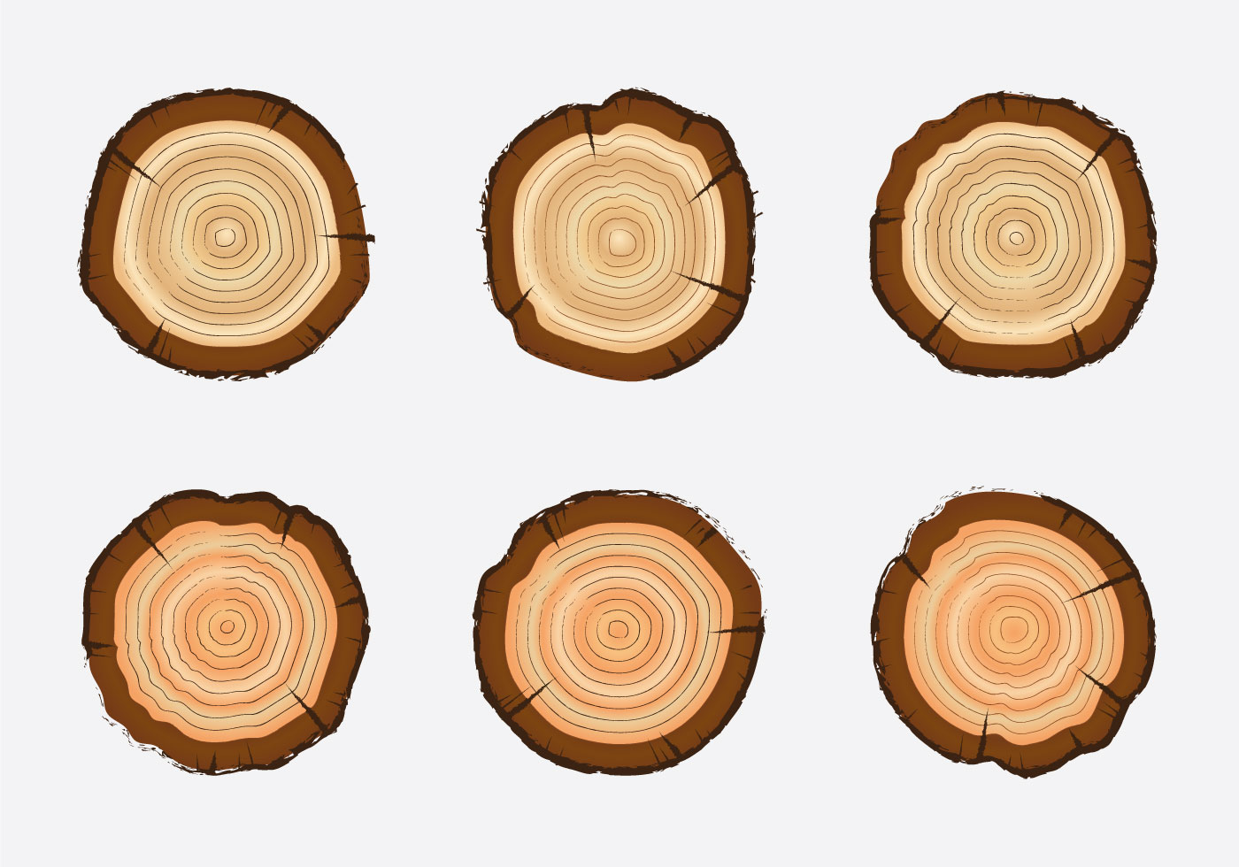 Tree Rings Free Vector Art.