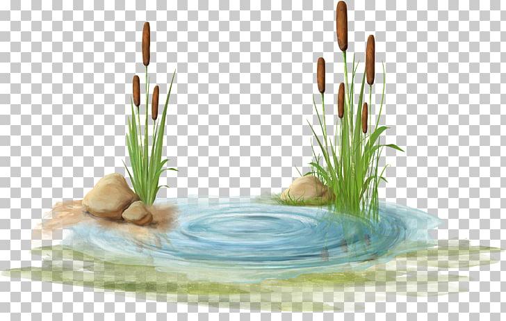 Swamp , Watermark blue stone, flowers on body of water PNG.
